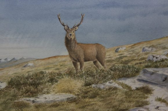 Scottish Stag & Hinds