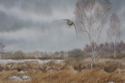 Connemara Woodcock