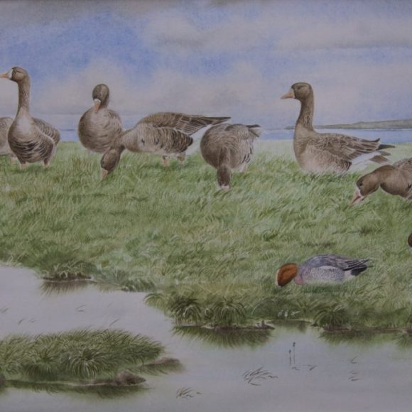 White Fronts and Wigeon