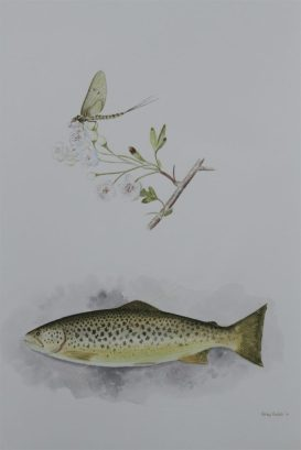 Brown Trout & Mayfly