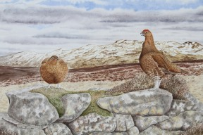 Grouse pair on old wall