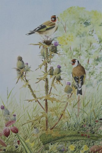 Goldfinches &Thistles
