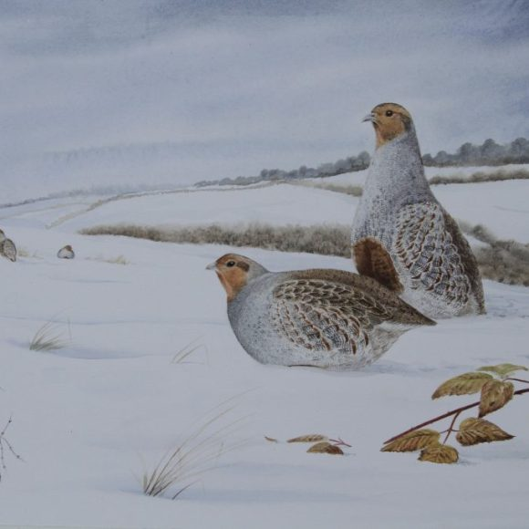 """Hard Times"" (Grey Partridge)"