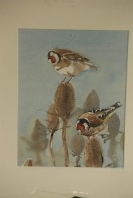 Goldfinches and teesals