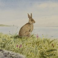 Connemara Hare