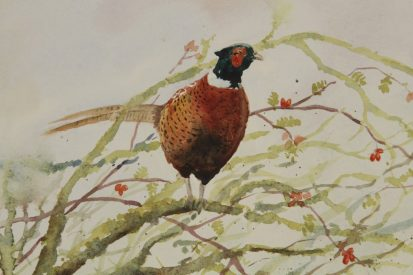 Pheasant in Whitethorn