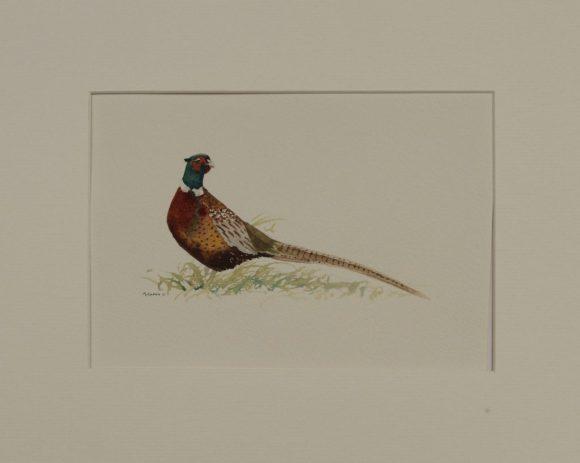 """""""Cock Pheasant"""""""