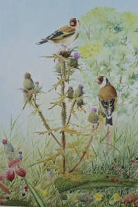 """""""Goldfinches and Thistles"""",( Image size 325 x 425mm), Euro 1200, Framed."""