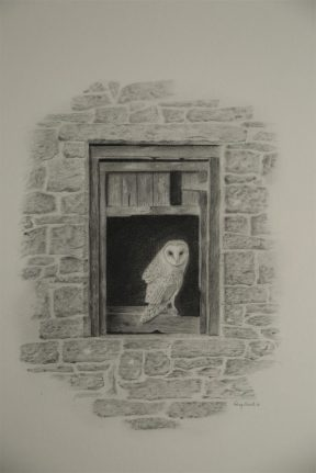 Barn owl in window