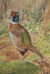 Woodland Pheasant