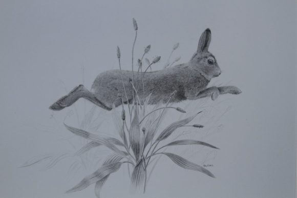 Hare & Plantain