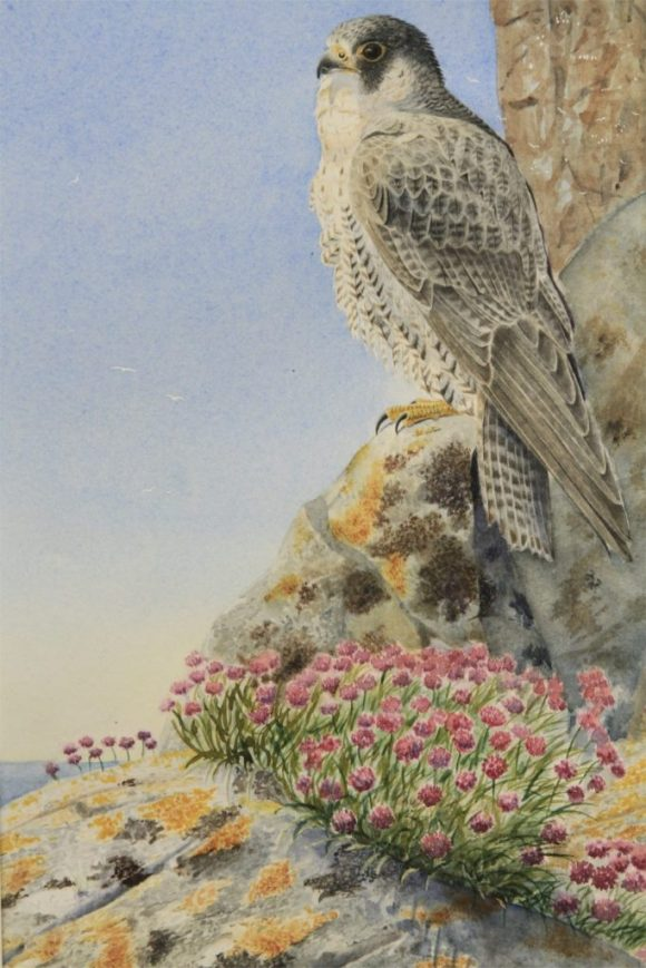 """Lofty Lookout"" (Peregrine)"