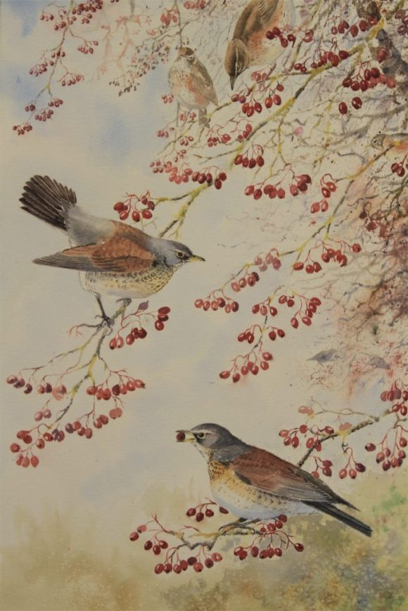 Autumn Bounty (Fieldfares/Redwings)