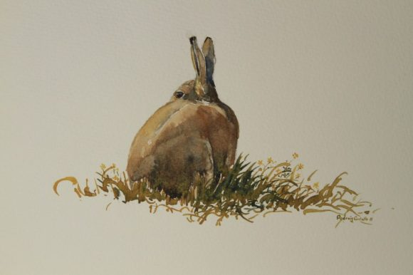 Watchful Hare