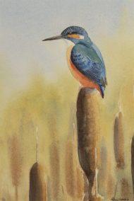 Kingfisher on Reed Mace