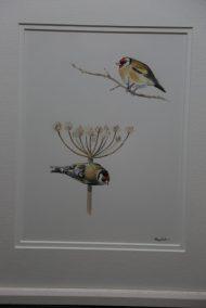 Goldfinch on Hogweed & Twig