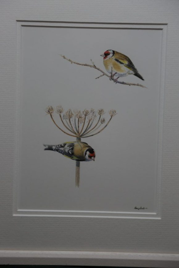 Goldfinch on Hogweed & Twig