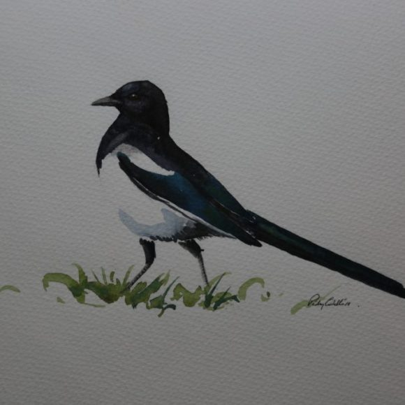 Walking Magpie