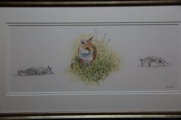 Fox Studies
