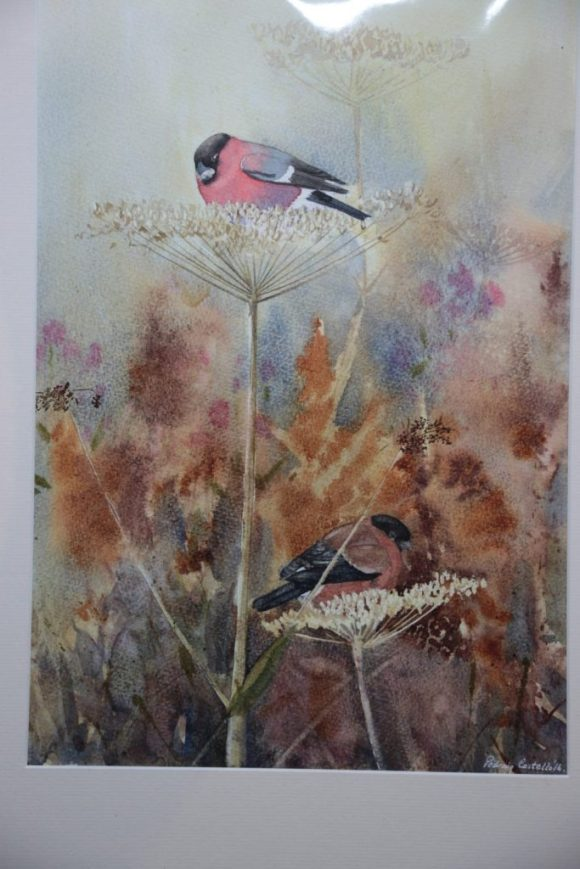Bullfinch Pair on Hogweed
