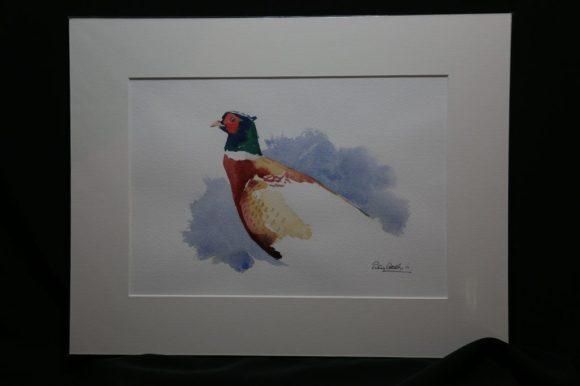Pheasant Study
